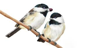 watercolor tutorial chickadee black capped chickadees watercolor youtube