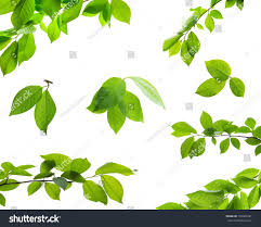 set green tree leaves branches raindrops stock photo 378306781