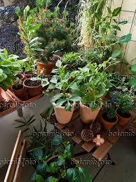 topfpflanzen balkon bild balkon mit zahlreichen topfpflanzen 461164 bilder und