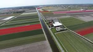 aerial video tulip fields near keukenhof gardens netherlands