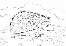 hedgehog food colouring pages bulk color