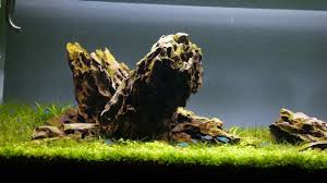 aquascaping layouts with stone and driftwood iwagumi aquascape final video day 44 youtube