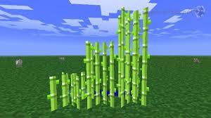 Minecraft Bookshelf Placement Farming Sugar Cane Minecraft 101