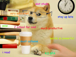 Much Doge Meme - when you re studying and you have an unsettling moment of self