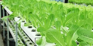 is a grow tent good for indoor gardening rebecca grow tent