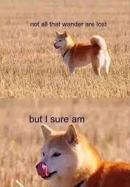 Doge Meme Best - for more dank memes to satisfy your dank needs follow