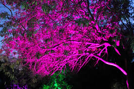 enchanted forest of light tickets discount tickets to enchanted forest of light at descanso gardens