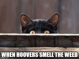 Sneaky Cat Meme - sneaky cat eyes memes imgflip