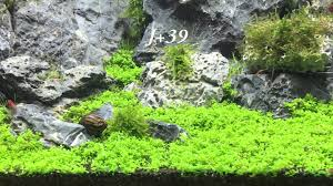 Aquarium Aquascaping Aquarium Aquascaping Dennerle 50l Step By Step Evolution Co2