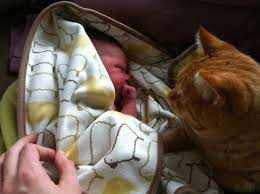 cats afterpains community birth story pippa two rivers childbirth
