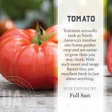 tomato vegetable garden grow kit from jackson u0026 perkins