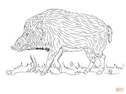 wild boars coloring pages free coloring pages