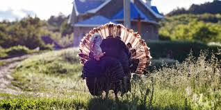 happy thanksgiving from rmnb here s some things we re thankful for