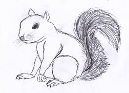 squirrel drawing coloring page blog