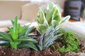 how to make an indoor succulent garden zandalus net