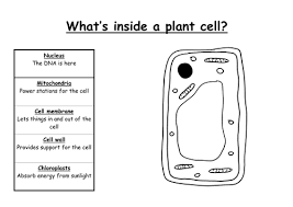 animal and plant cells by fiendishlyclever teaching resources tes