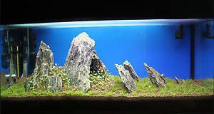 Aquarium Aquascaping 25 Kg Natural Wood Stone For An Aquarium Aquascaping Iwagumi Style