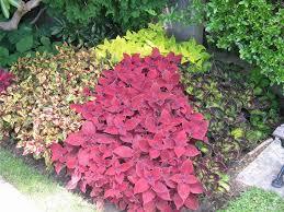 brokohan garden ideas page indoor design diy gardening with