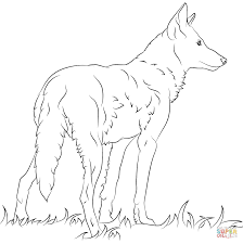 florida red wolf coloring page free printable coloring pages