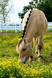 toyota motor manufacturing kentucky wikipedia best 25 kentucky horse park ideas on pinterest kentucky horse