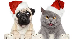 pet christmas keep your pets safe this christmas swan hill rural city council