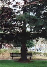 Flag With Tree And Moon Salem Oregon Moon Tree