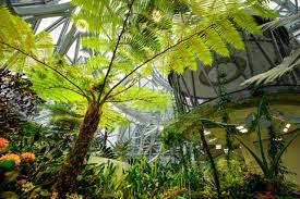 high in the trees inside s spheres a unique meeting space
