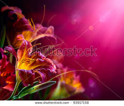 Lilly Flowers Art Lily Flowers On Red Background Stock Photo 93917158 Shutterstock
