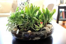 succulent terrarium pictures and ideas