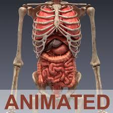 Pictures Of The Human Body Internal Organs Human Internal Organs 3d Model