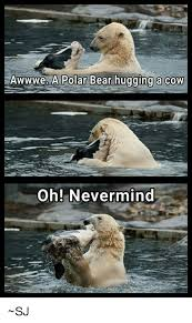 Polar Bear Meme - awwwe a polar bear hugging a cow oh nevermind sj bear meme on