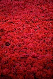 Dark Red Flower - best 25 red flowers ideas on pinterest red wedding flowers red