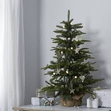 best 25 3ft tree ideas on tree