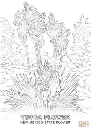 new mexico state flower coloring page free printable coloring pages