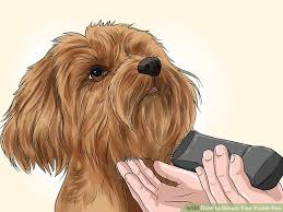 yorkie poo haircut how to groom your yorkie poo 10 steps with pictures wikihow