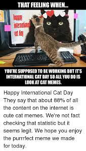 Cute Cat Memes - 25 best memes about cute cat memes cute cat memes