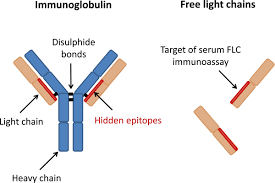 difference between kappa and lambda light chains polyclonal free light chains a biomarker of inflammatory disease or