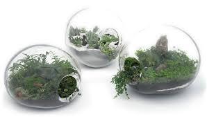 james modern terrariums colossal