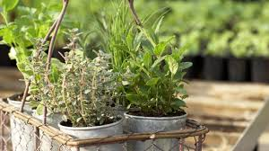 how to arrange herbs in containers at home with p allen smith