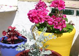 garden pots and planters com buy garden plant pots