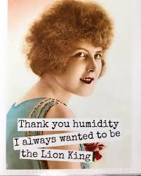 Lion King Meme Blank - lion king of humidity lions humour and stuffing
