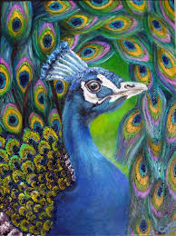 the 25 best peacock print ideas on pinterest peacock art
