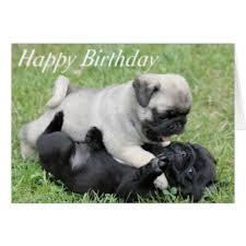 happy birthday pug greeting cards zazzle co uk