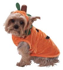 matching dog and owner halloween costumes amazon com forum novelties pumpkin pet promo costume small