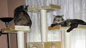 Cat Gyms Hd How To Make A Cat Tree Step By Step Instructions Youtube
