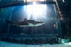 shark fish tank