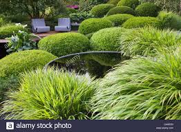 a contemporary green garden with grasses topiary box mounds pool