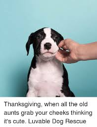 thanksgiving when 100 images how to survive thanksgiving when
