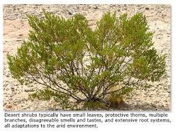 Plants That Survive With No Light How Desert Plants Survive Desertusa
