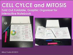 cell cycle and mitosis graphic organizer foldable for interactive